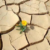 根要扎在土壤里